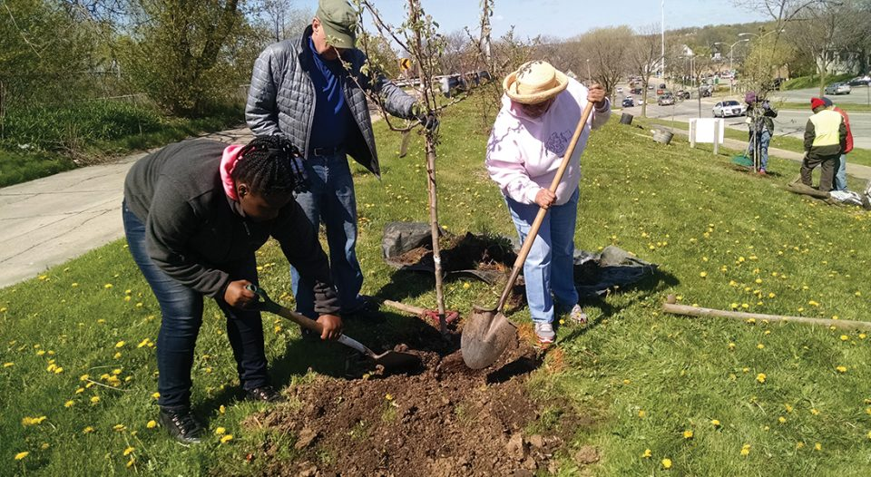 Three people planting an apple tree