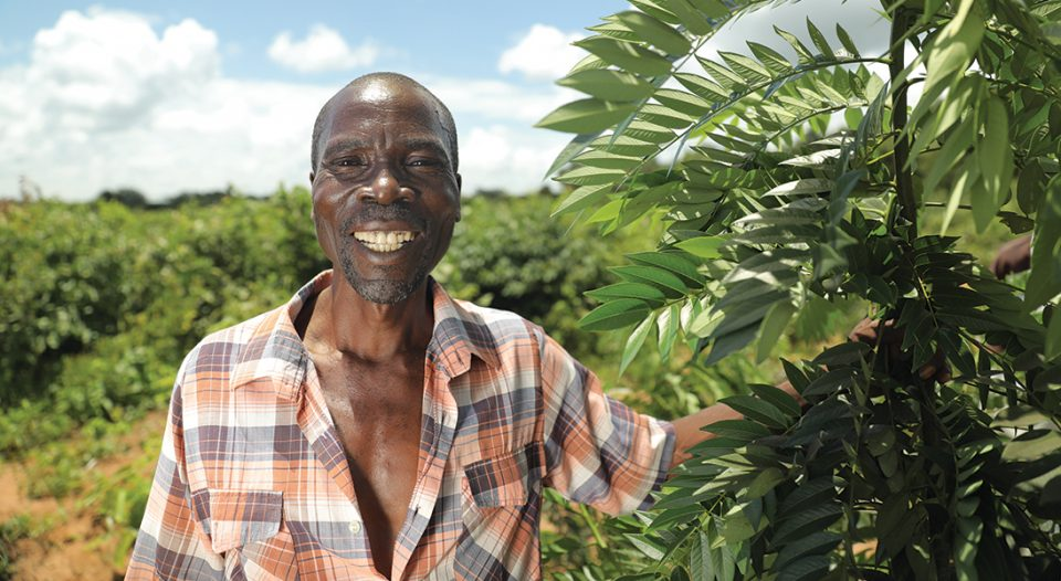Training and financial support from the Evangelical Lutheran Church in Malawi equipped Shadrack Tsatautenda to cultivate a tree farm on land owned by his family for five generations.