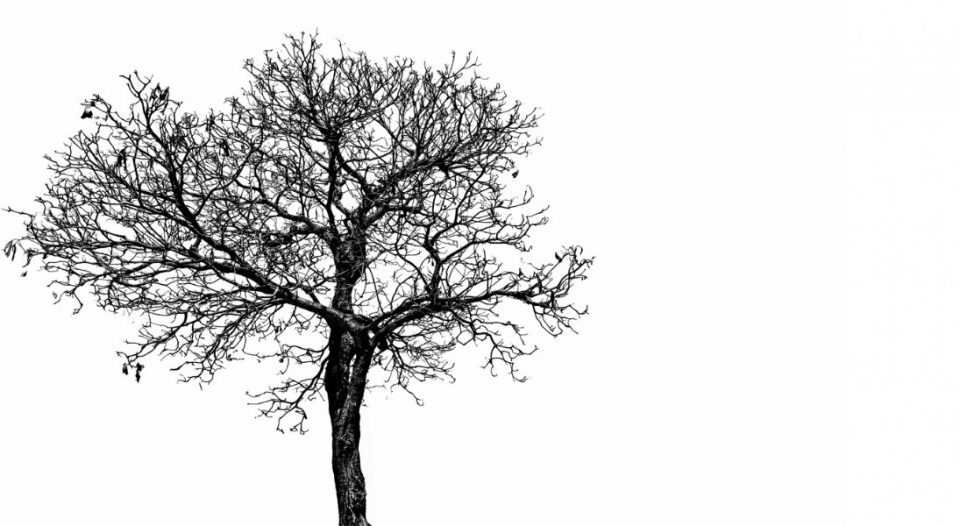 black tree against a white background
